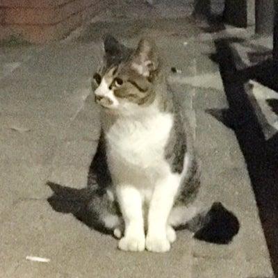 TNR〜すず&さとの母猫チビ〜の記事に添付されている画像