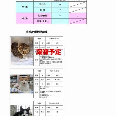 茨城センター 猫の譲渡情報(2019年1月22日現在)の記事に添付されている画像