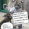 #シンクロニシティカードの画像