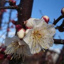 春を見つけての記事に添付されている画像