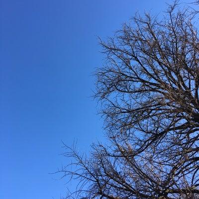 みんな違ってみんないい~シベリウスの樅の木の曲を聴いて~の記事に添付されている画像
