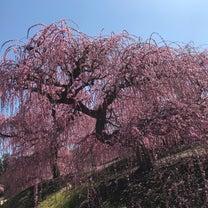 新春重ねの色目~梅・梅重・裏梅・紅梅・紅梅匂・莟紅梅。の記事に添付されている画像