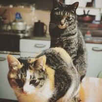 夕方の猫ら…の記事に添付されている画像