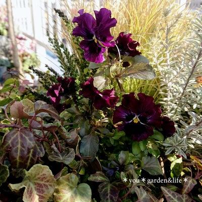 *小春日和の庭とバルコニー*ささやかな草花達の春のお支度の記事に添付されている画像