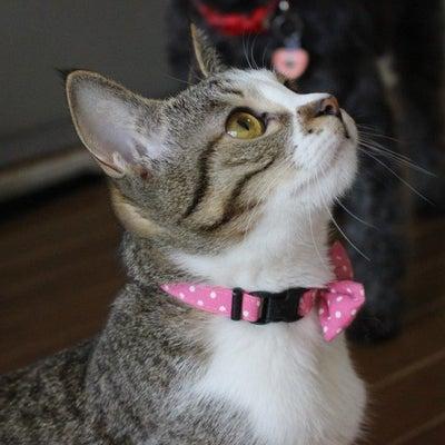 やっぱり・・可愛い保護猫 めぐりん・・優しいお姉ちゃんですの記事に添付されている画像