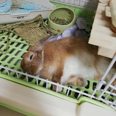 ゆう太くん換毛期なの?(((^_^;)の記事に添付されている画像
