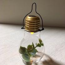 【100均雑貨リメイク】電球オーナメント作りました☆の記事に添付されている画像