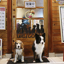 1月6日びーちゃん、お好み焼き初め(@まつや)の記事に添付されている画像