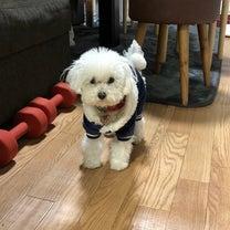 今日の稽古〜お犬さま事情〜の記事に添付されている画像