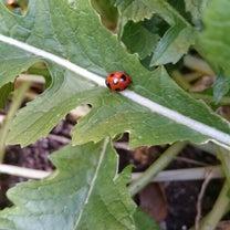 真冬のてんとう虫の記事に添付されている画像