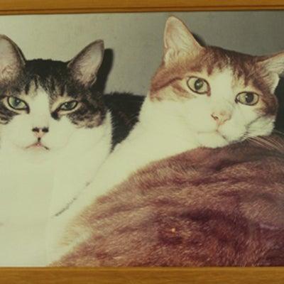 1月最後の日は、猫たちの思い出をの記事に添付されている画像