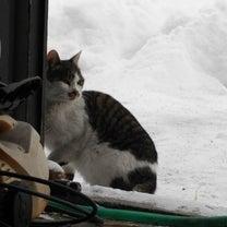 雪宿りの旅猫の記事に添付されている画像