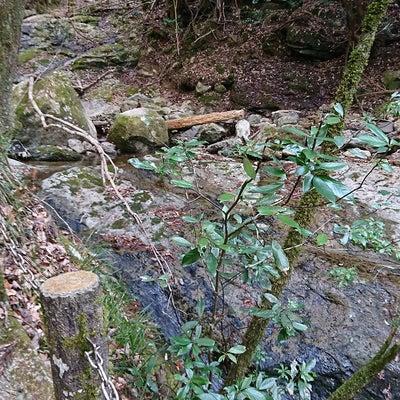 安富ダム~鹿ヶ壺(中編)の記事に添付されている画像