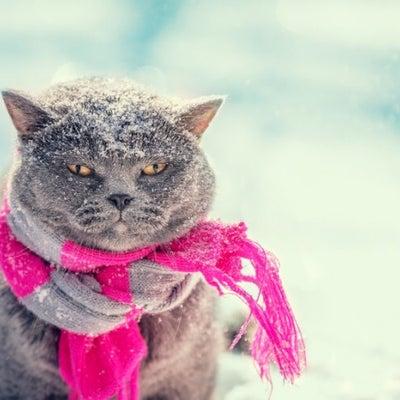 寒さ対策どうしてますか?の記事に添付されている画像