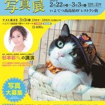 2/24 犬猫里親さがし会参加犬猫紹介の記事に添付されている画像