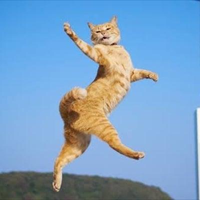 猫拳?最近のSORAの施術の話の記事に添付されている画像
