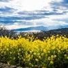 吾妻山公園の画像