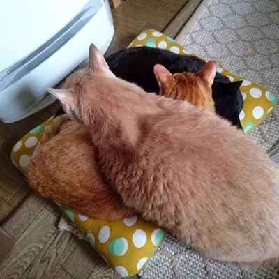 【猫の看取りとペットロス】⑩1月28日 陸が逝って五日めの記事に添付されている画像
