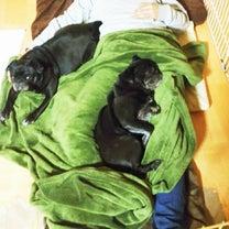 寝相が悪いと添い寝も大変の記事に添付されている画像