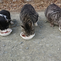 【1月27日の活動報告 (その1)】無責任な人間の犠牲になった「5匹の猫さん」のの記事に添付されている画像