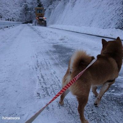 散歩中に爆音響く除雪車に遭遇して驚く~柴犬ひなあおそらの記事に添付されている画像