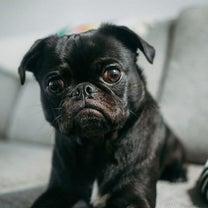 誤解・見逃しがちな犬の行動や病気のサインとは?の記事に添付されている画像