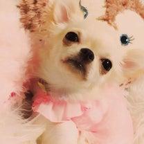 杏(元スターリングラード)ちゃんママから、この犬用の歯ブラシいいですよ♪の記事に添付されている画像