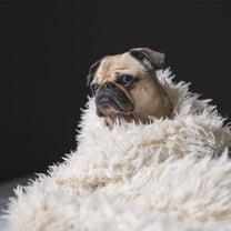 犬と暮らすための冬支度!の記事に添付されている画像