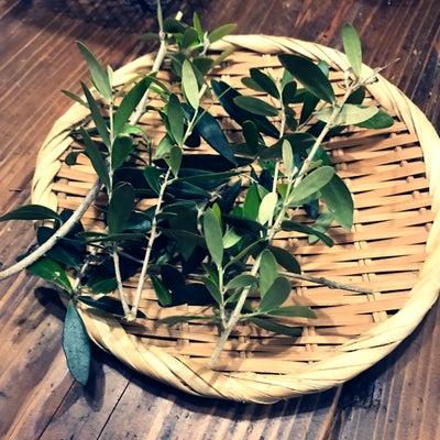 オリーブ茶の記事に添付されている画像