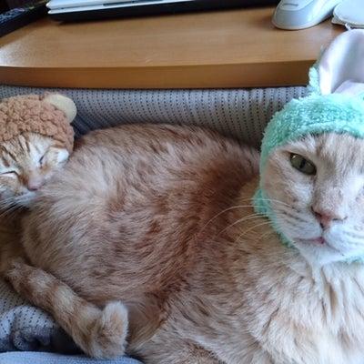 【猫の看取りとペットロス】⑪1月29日 陸の初七日の記事に添付されている画像