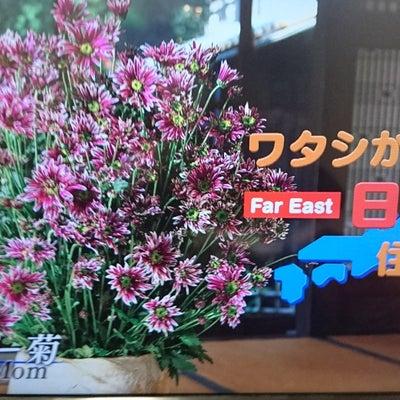 ナタリー先生のテレビ番組『ワタシが日本に住む理由』の記事に添付されている画像