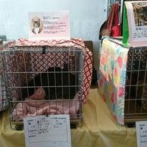 1/27(日)ひばりテラス118「猫の譲渡会」ご報告&次回は3/24(日)開催での記事に添付されている画像