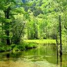 美しい池 ~NWO後の世界~の記事より