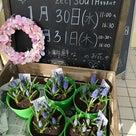 【1月29日&30日は】Flower noteのお花屋さん♪の記事より