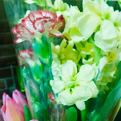 なんの花?の記事に添付されている画像