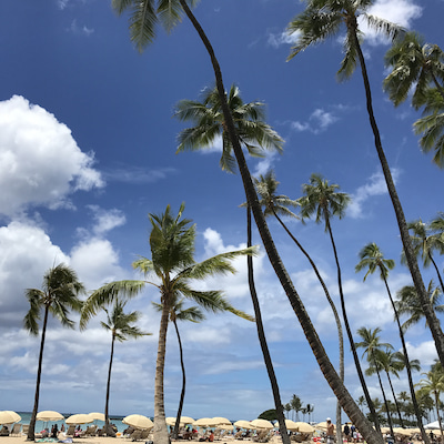 2017夏休み♡ハワイに到着の記事に添付されている画像