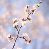 4月ご予約状況【3月残りわずか】の記事に添付されている画像
