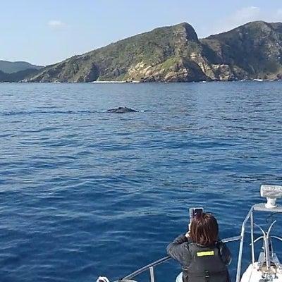 クジラ急接近❗沖縄で粋な海遊び・シーワークス沖縄アイランドの記事に添付されている画像