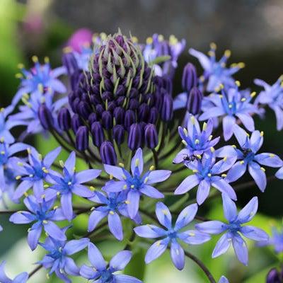 2月2日 誕生花と花言葉の記事に添付されている画像