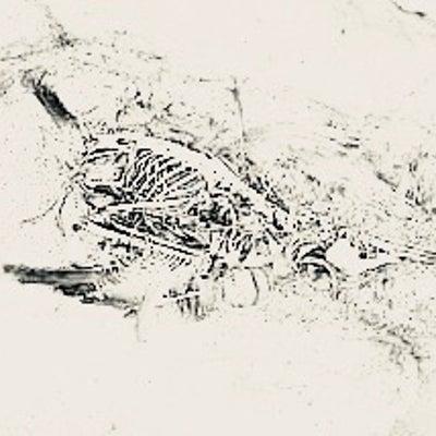 【詩】『青い鳥の骨』の記事に添付されている画像