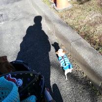 いつもと違う散歩道♡の記事に添付されている画像