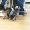 保護犬のまきちゃんの画像