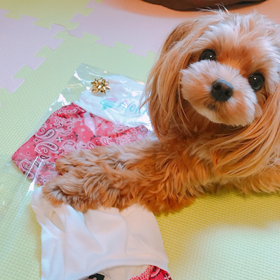 ロンハーマン愛犬とペアルックが流行⁉︎の記事に添付されている画像