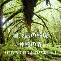 募集【屋久島】約束の大地で集う「レムリアン・リトリート」!の記事に添付されている画像
