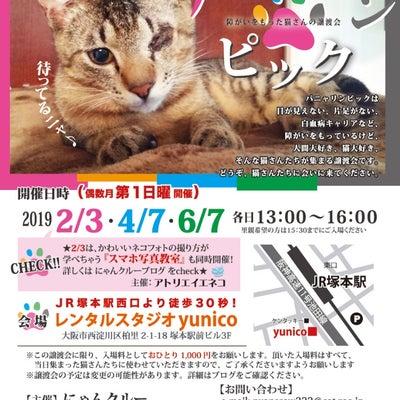本日、障害を持った猫さんの譲渡会、パニャリンピックですの記事に添付されている画像