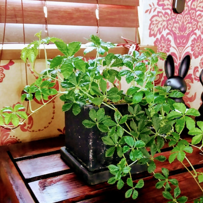 室内オススメ観葉植物の記事に添付されている画像