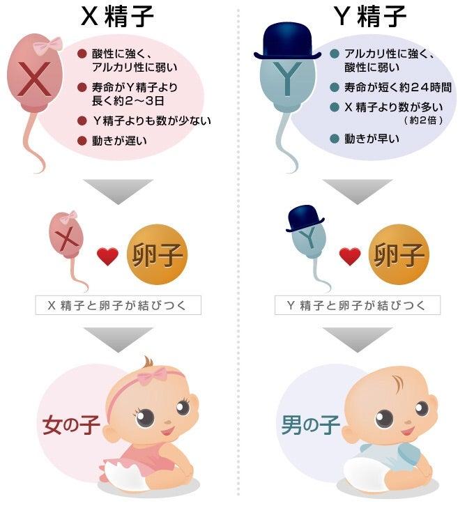 排卵日 推測 産み分け 排卵日は推測できますか?丨妊活サポート掲示板
