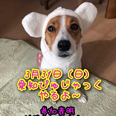 愛知ぴゅじゃっく やるよ~!!の記事に添付されている画像