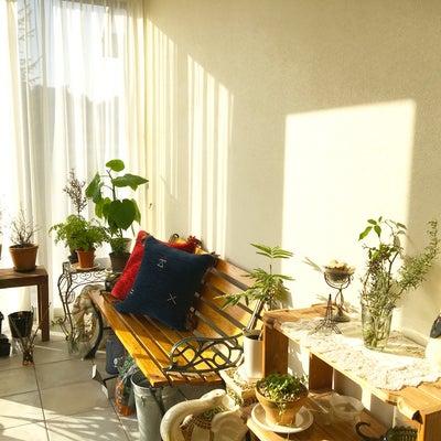 亭主は元気で家がいい˚∙︎⑅︎♡︎♪︎の記事に添付されている画像