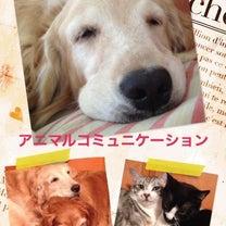 【お知らせ】3/2好評♡アニマルコミュニケーション入門編の記事に添付されている画像